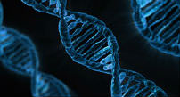 Cadena de ADN.